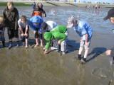 Nationalpark-Erlebnis im Weltnaturerbe Wattenmeer